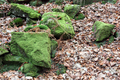 UK - Moss covered rocks